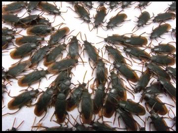 特殊な苔と、ゴキブリを大量に放ち、地表を黒く染め上げることで