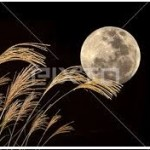 中秋の名月2015とはいつ?都内お月見イベント!海外で皆既月食