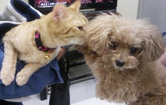 ダメ恋-喫茶店ひまわりの看板猫と深キョン愛犬のツーショット-画像
