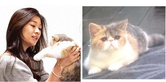 ドラマ「オトナ女子」の猫-画像